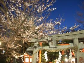祇園白川ライトアップ