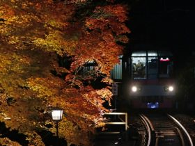 もみじのトンネル紅葉ライトアップ