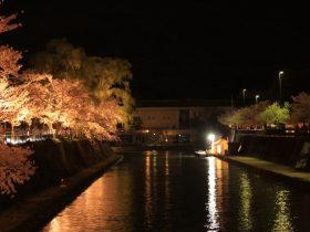 岡崎疏水桜ライトアップ