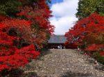 宝泉院紅葉