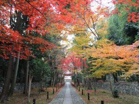 鹿王院紅葉