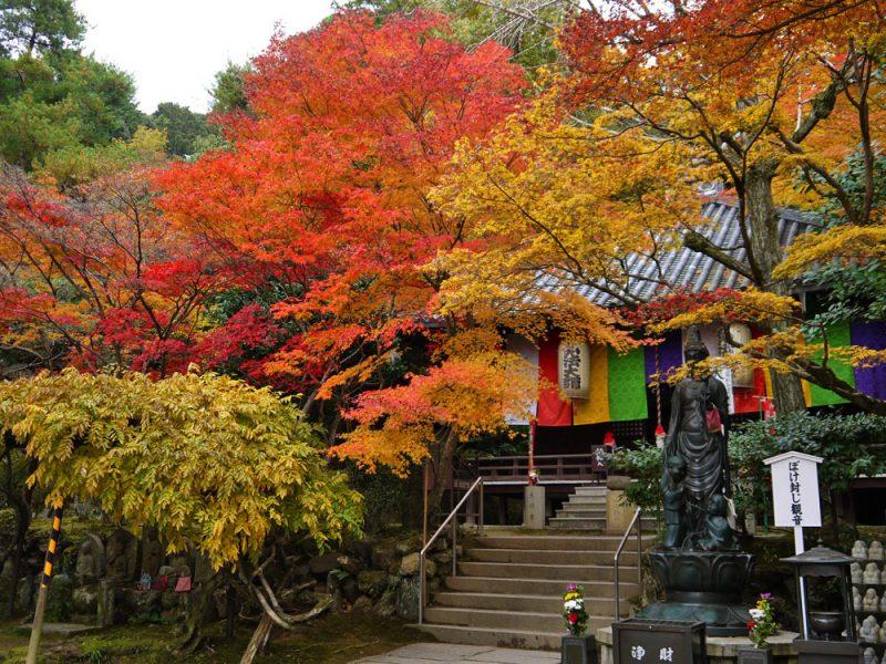 今熊野観音寺紅葉見ごろ