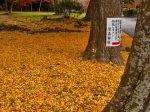 鷺森神社紅葉見ごろ